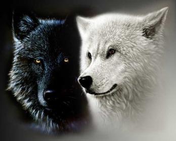 vukovi1