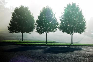 three-trees