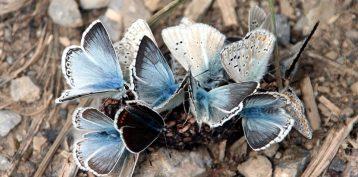 butterflies-1369896_960_720-960x475