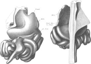 pernkof-atlas-wikimedia-696x493