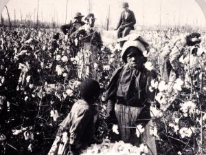 African-American children working in a Cotton field 1860s-90s